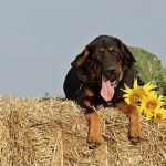 Wyjazd z psem na wakacje – co zabrać?