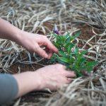 Pielęgnacja ogrodu – o czym należy pamiętać?