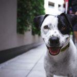 Jak można ochronić swojego psa przed kleszczami w okresie wiosny i lata?