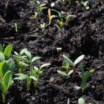 Rozwój roślin – jak można go wspomóc?