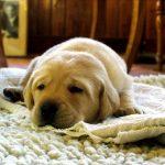 Jak walczyć z nadwagą i otyłością u psa?